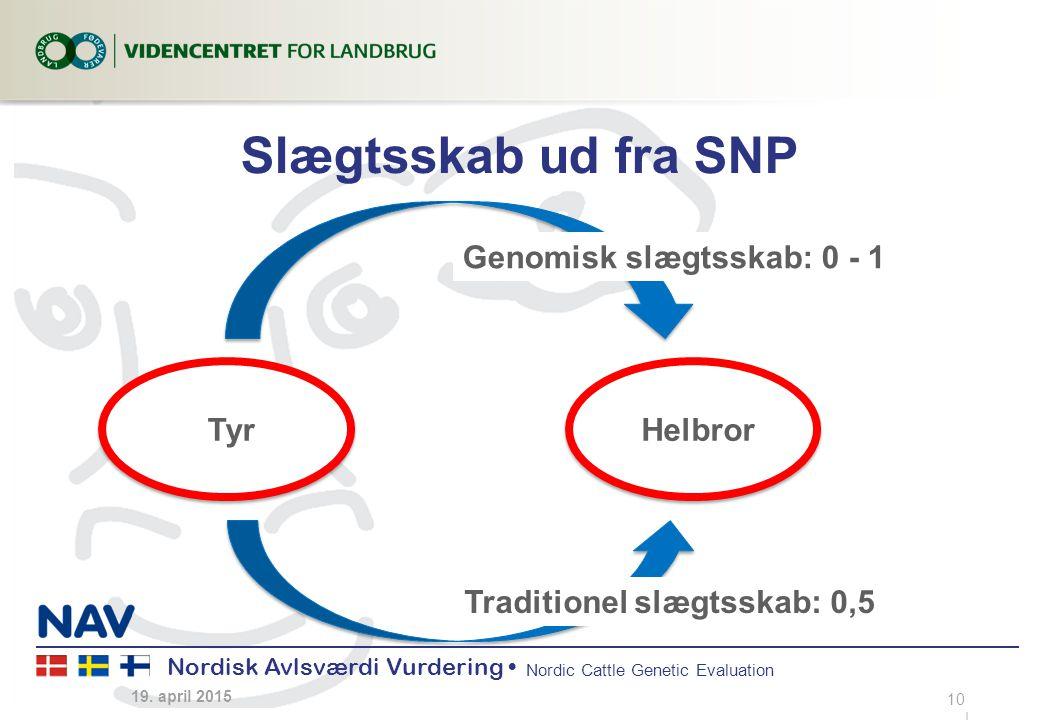 Nordisk Avlsværdi Vurdering Nordic Cattle Genetic Evaluation Slægtsskab ud fra SNP 19.