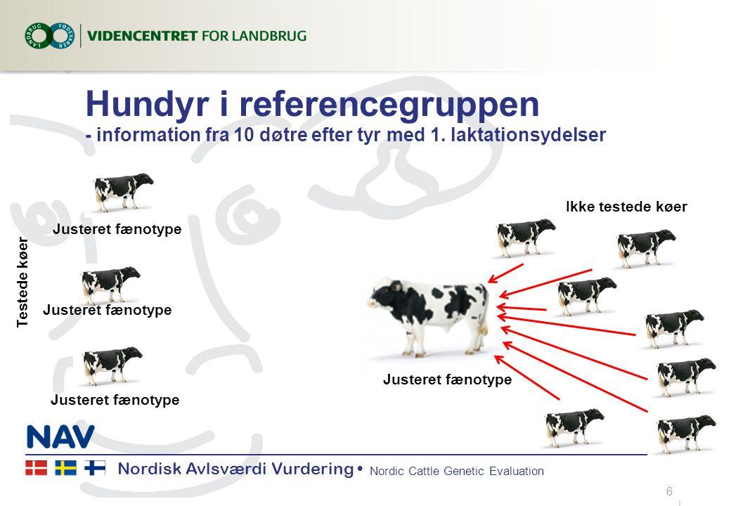 Nordisk Avlsværdi Vurdering Nordic Cattle Genetic Evaluation Hundyr i referencegruppen - information fra 10 døtre efter tyr med 1.
