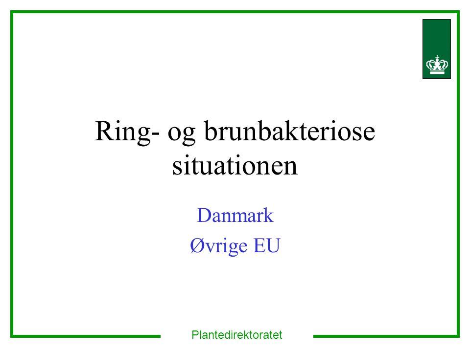 Ring- og brunbakteriose situationen Danmark Øvrige EU