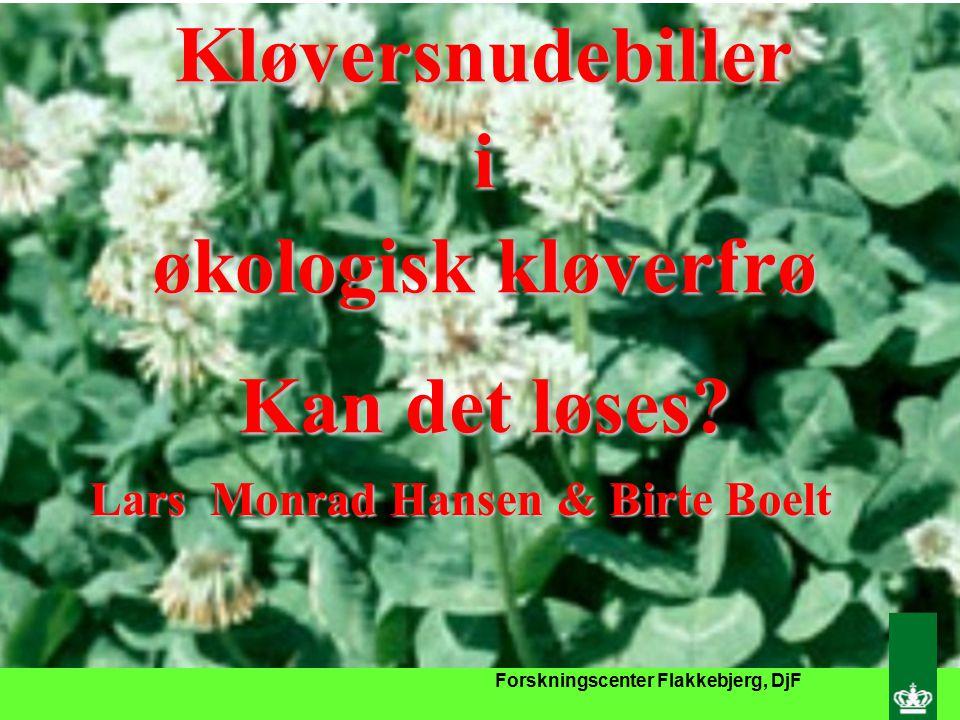 Forskningscenter Flakkebjerg, DjF Kløversnudebilleri økologisk kløverfrø Kan det løses.
