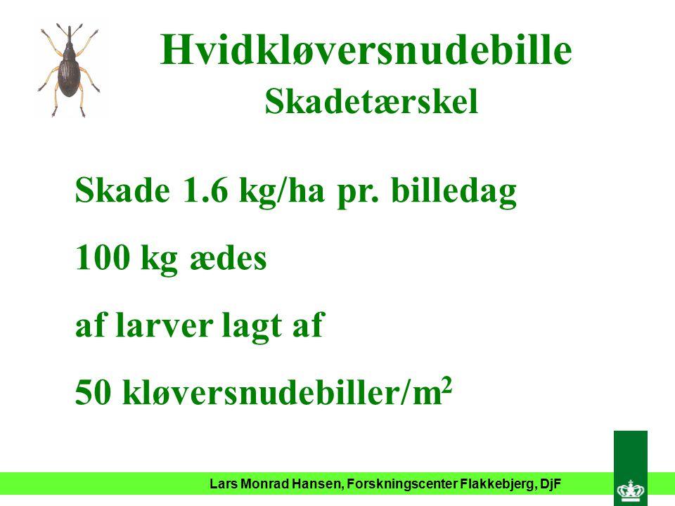 Lars Monrad Hansen, Forskningscenter Flakkebjerg, DjF Hvidkløversnudebille Skadetærskel Skade 1.6 kg/ha pr.