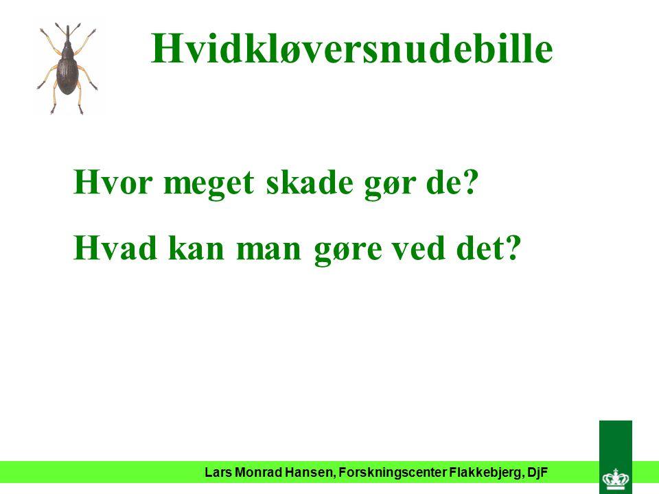 Lars Monrad Hansen, Forskningscenter Flakkebjerg, DjF Hvidkløversnudebille Hvor meget skade gør de.