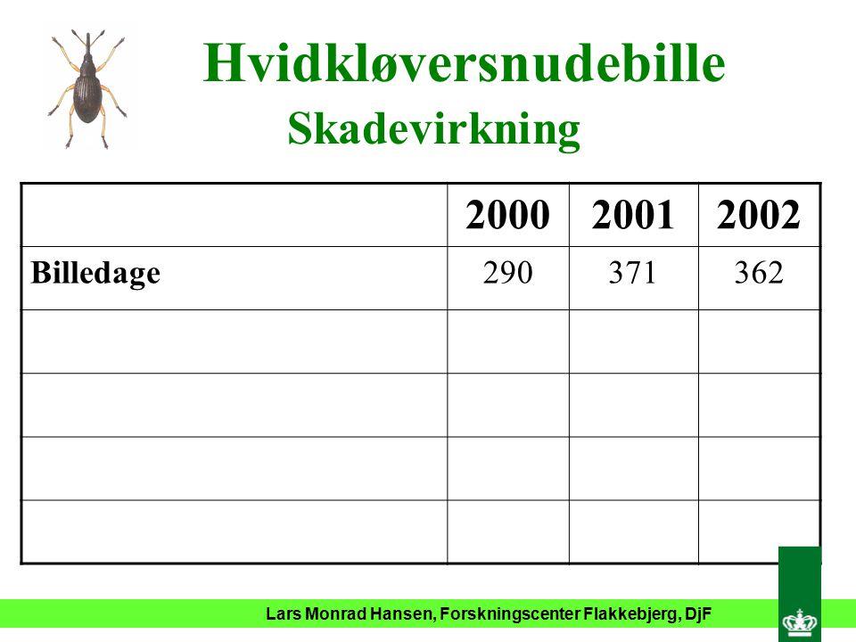 Lars Monrad Hansen, Forskningscenter Flakkebjerg, DjF Hvidkløversnudebille Skadevirkning 200020012002 Billedage290371362
