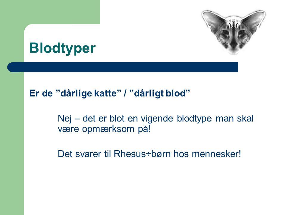 Blodtyper Er de dårlige katte / dårligt blod Nej – det er blot en vigende blodtype man skal være opmærksom på.