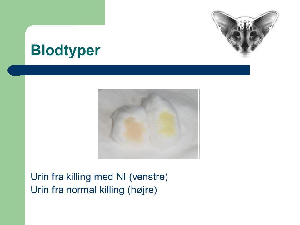 Blodtyper Urin fra killing med NI (venstre) Urin fra normal killing (højre)