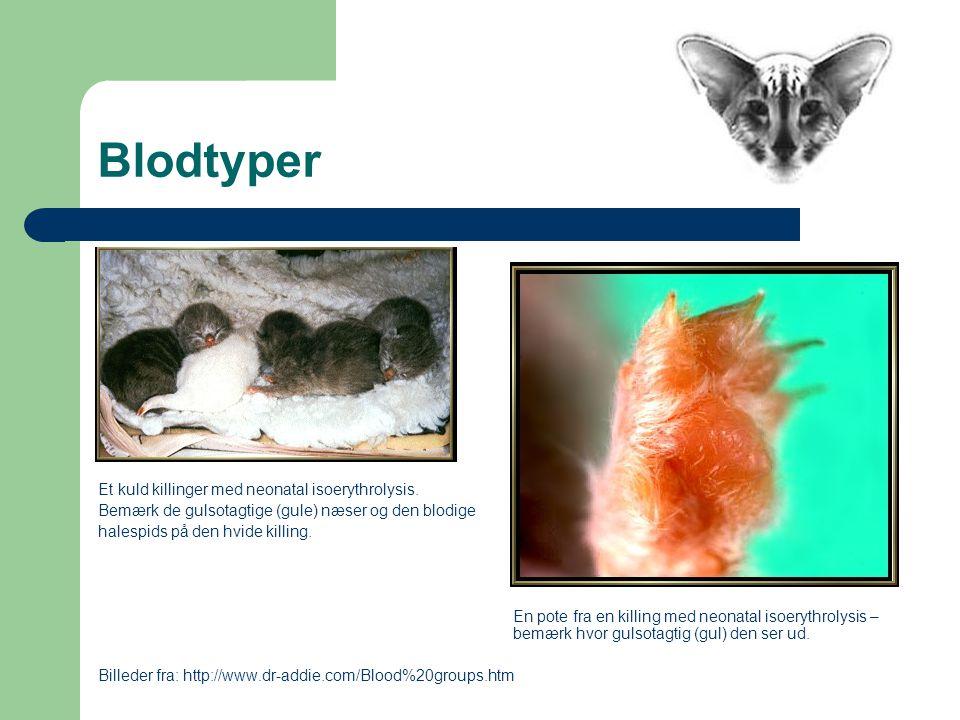 Blodtyper Et kuld killinger med neonatal isoerythrolysis.