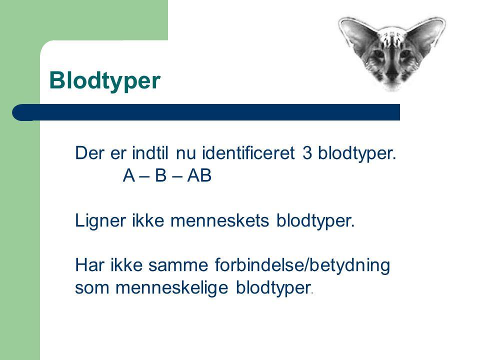 Blodtyper Der er indtil nu identificeret 3 blodtyper.
