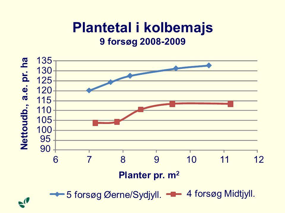 Plantetal i kolbemajs 9 forsøg 2008-2009 90 95 100 105 110 115 120 125 130 135 6789101112 Nettoudb., a.e.