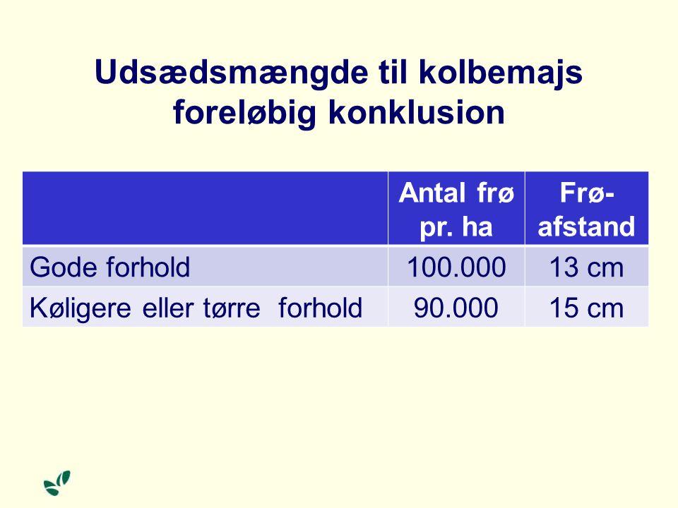 Udsædsmængde til kolbemajs foreløbig konklusion Antal frø pr.