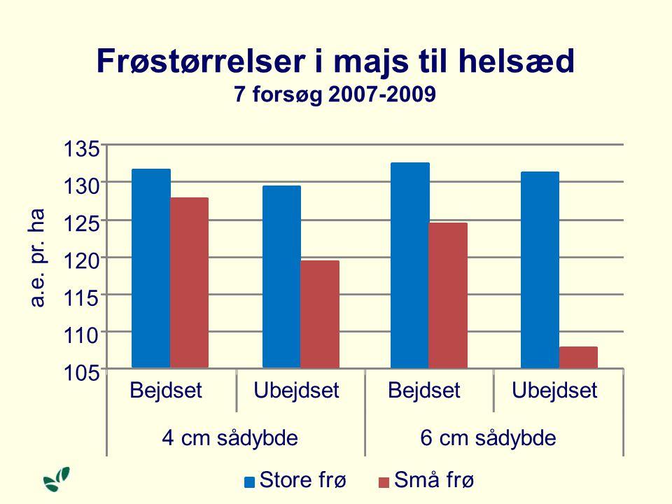 Frøstørrelser i majs til helsæd 7 forsøg 2007-2009 105 110 115 120 125 130 135 BejdsetUbejdsetBejdsetUbejdset 4 cm sådybde6 cm sådybde a.e.