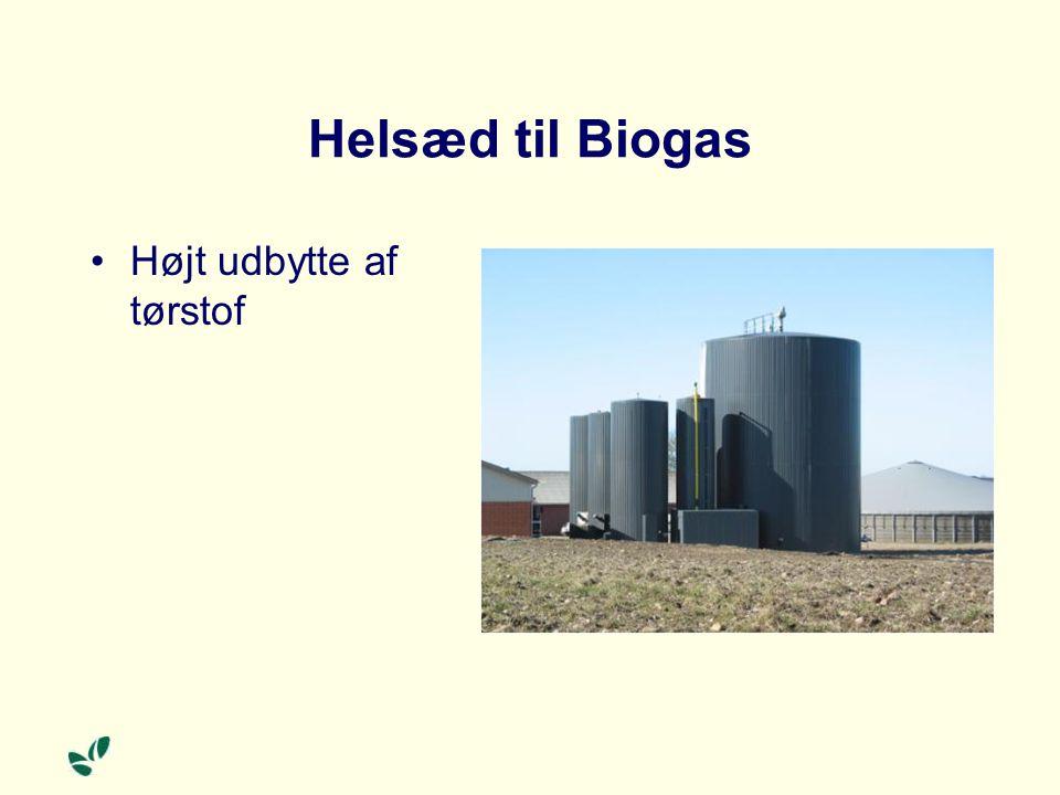 Helsæd til Biogas Højt udbytte af tørstof