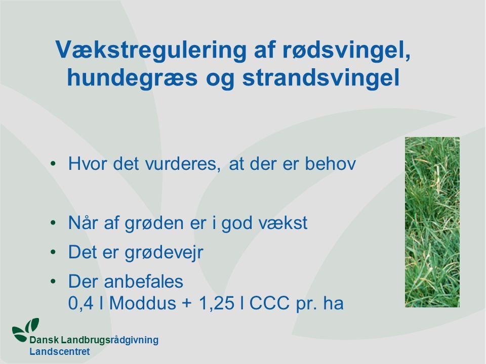 Dansk Landbrugsrådgivning Landscentret Vækstregulering af rødsvingel, hundegræs og strandsvingel Hvor det vurderes, at der er behov Når af grøden er i god vækst Det er grødevejr Der anbefales 0,4 l Moddus + 1,25 l CCC pr.