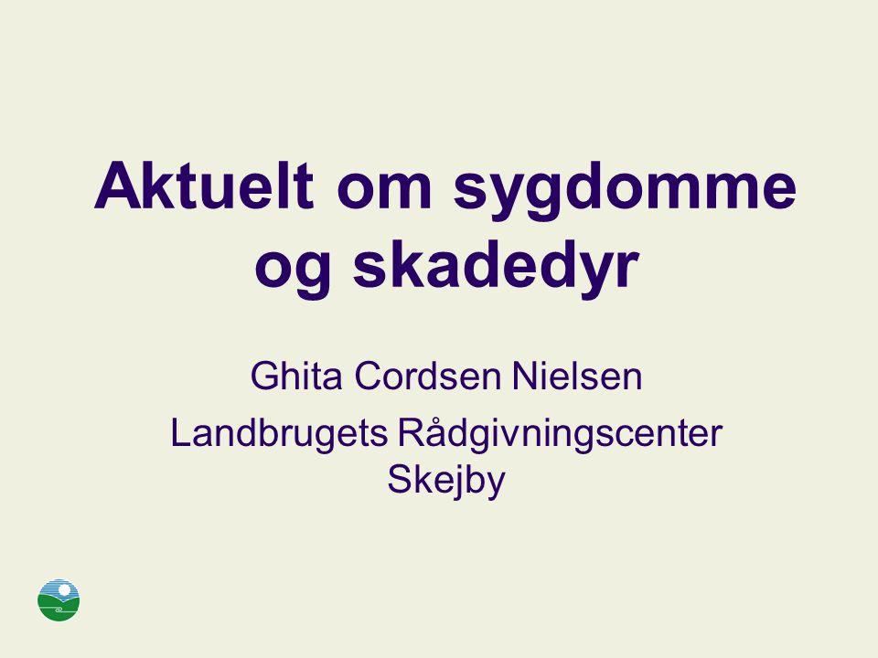 Aktuelt om sygdomme og skadedyr Ghita Cordsen Nielsen Landbrugets Rådgivningscenter Skejby