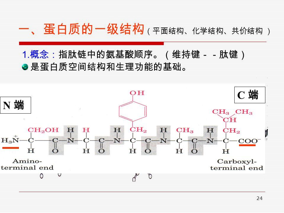 24 一、蛋白质的一级结构 (平面结构、化学结构、共价结构 ) 1. 概念:指肽链中的氨基酸顺序。(维持键--肽键) 是蛋白质空间结构和生理功能的基础。 N 端 C 端