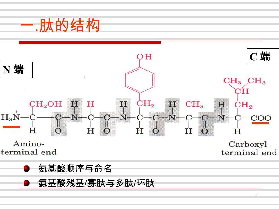 3 一. 肽的结构 氨基酸顺序与命名 氨基酸残基 / 寡肽与多肽 / 环肽 N 端 C 端