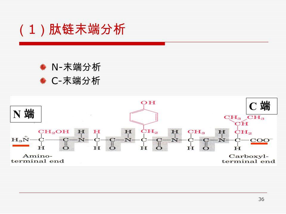 36 ( 1 )肽链末端分析 N- 末端分析 C- 末端分析 N 端 C 端
