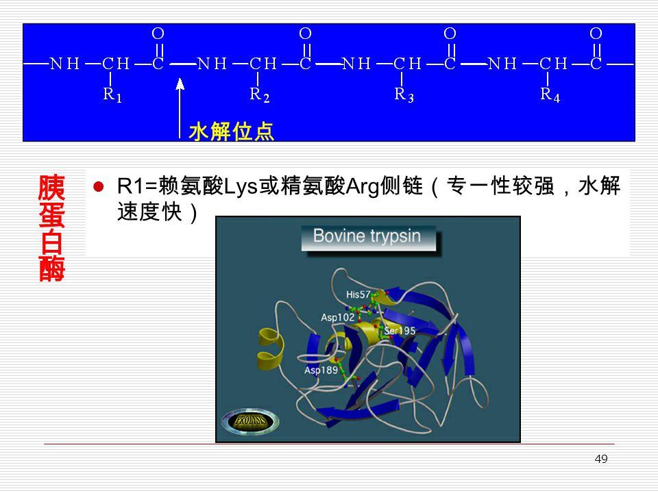 49 R1= 赖氨酸 Lys 或精氨酸 Arg 侧链(专一性较强,水解 速度快) 水解位点