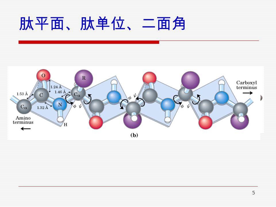 5 肽平面、肽单位、二面角