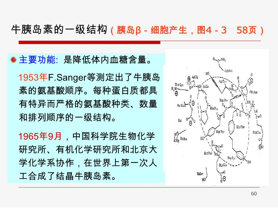 60 (胰岛 β -细胞产生,图 4 - 3 58 页) 牛胰岛素的一级结构 (胰岛 β -细胞产生,图 4 - 3 58 页) 主要功能 : 是降低体内血糖含量。 1953 年 F.Sanger 等测定出了牛胰岛 素的氨基酸顺序。每种蛋白质都具 有特异而严格的氨基酸种类、数量 和排列顺序的一级结构。 1965 年 9 月,中国科学院生物化学 研究所、有机化学研究所和北京大 学化学系协作,在世界上第一次人 工合成了结晶牛胰岛素。 猪
