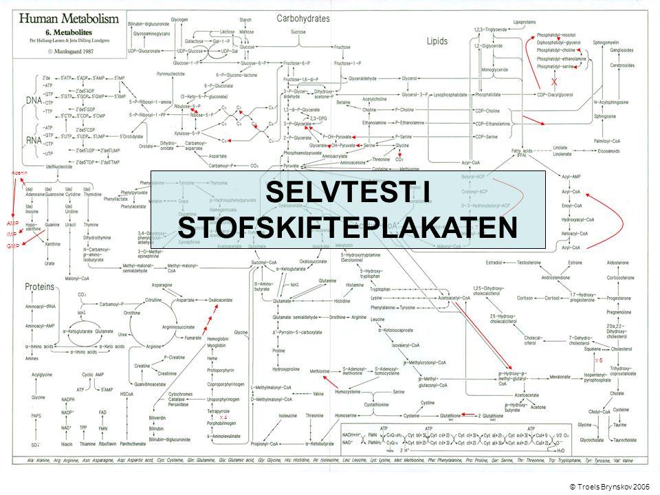 X Adenin © Troels Brynskov 2005 x 7 x 6 x 4 AMP IMP GMP SELVTEST I STOFSKIFTEPLAKATEN