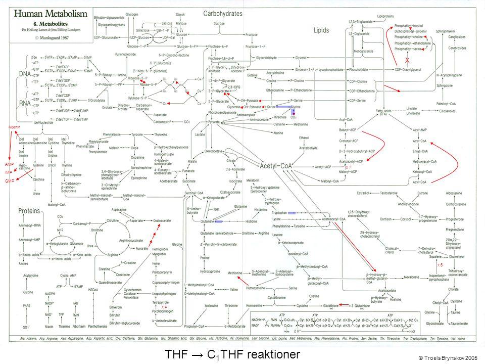 X Adenin © Troels Brynskov 2005 x 7 x 6 x 4 AMP IMP GMP THF → C 1 THF reaktioner