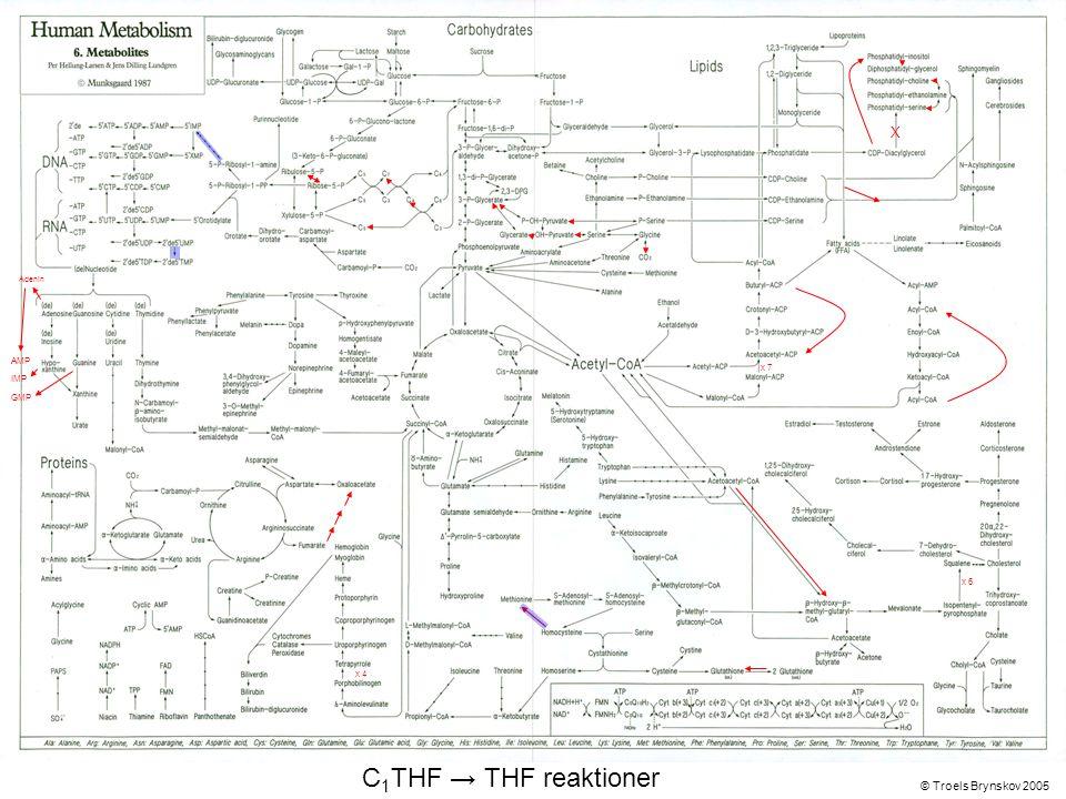 X Adenin © Troels Brynskov 2005 x 7 x 6 x 4 AMP IMP GMP C 1 THF → THF reaktioner