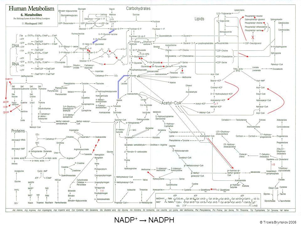 X Adenin © Troels Brynskov 2005 x 7 x 6 x 4 AMP IMP GMP NADP + → NADPH