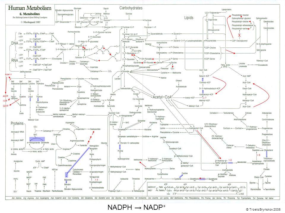 X Adenin © Troels Brynskov 2005 x 7 x 6 x 4 AMP IMP GMP NADPH → NADP + x 2