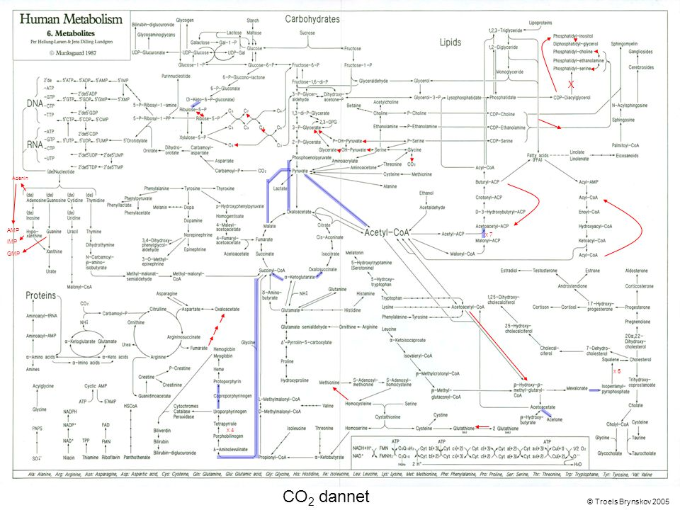 X Adenin © Troels Brynskov 2005 x 7 x 6 x 4 AMP IMP GMP CO 2 dannet