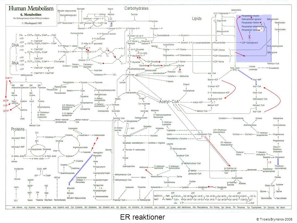 X Adenin © Troels Brynskov 2005 x 7 x 6 x 4 AMP IMP GMP ER reaktioner