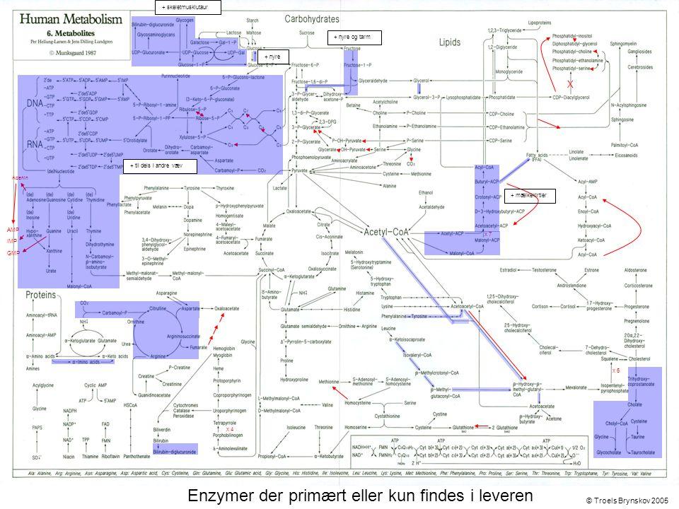 X Adenin © Troels Brynskov 2005 x 7 x 6 x 4 AMP IMP GMP Enzymer der primært eller kun findes i leveren + skeletmusklutaur + nyre og tarm + nyre + mælkekirtler + til dels i andre væv