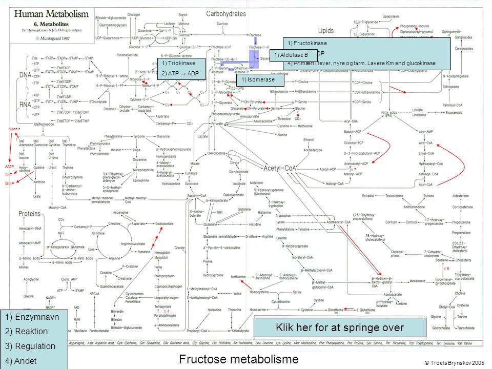 X Adenin © Troels Brynskov 2005 x 7 x 6 x 4 AMP IMP GMP Fructose metabolisme 1) Fructokinase 2) ATP → ADP 4) Primært i lever, nyre og tarm.