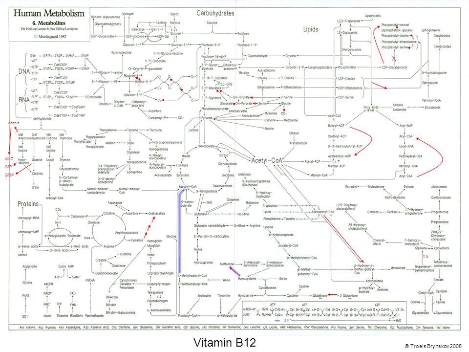 X Adenin © Troels Brynskov 2005 x 7 x 6 x 4 AMP IMP GMP Vitamin B12