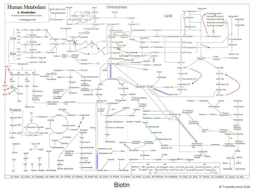 X Adenin © Troels Brynskov 2005 x 7 x 6 x 4 AMP IMP GMP Biotin