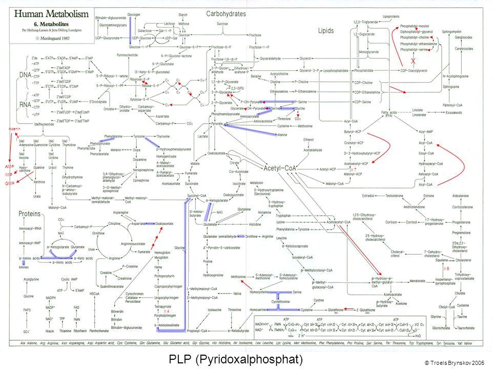 X Adenin © Troels Brynskov 2005 x 7 x 6 x 4 AMP IMP GMP PLP (Pyridoxalphosphat)