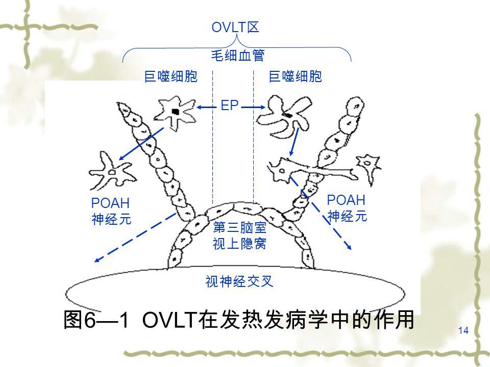 14 视神经交叉 第三脑室 视上隐窝 POAH 神经元 POAH 神经元 巨噬细胞 EP 毛细血管 OVLT 区 图 6—1 OVLT 在发热发病学中的作用