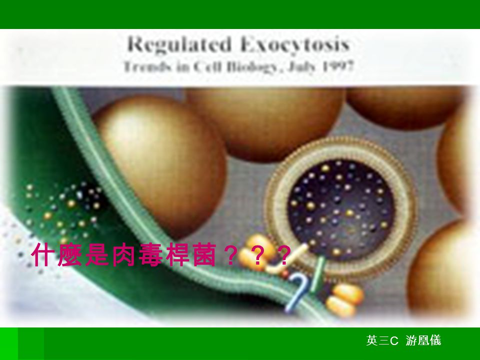 什麼是肉毒桿菌?? 什麼是肉毒桿菌??? 英三 C 游凰儀