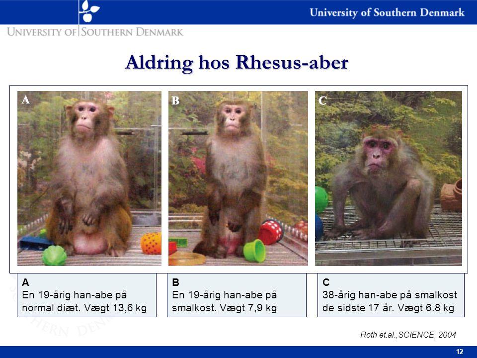 12 Aldring hos Rhesus-aber Roth et.al.,SCIENCE, 2004 A En 19-årig han-abe på normal diæt.