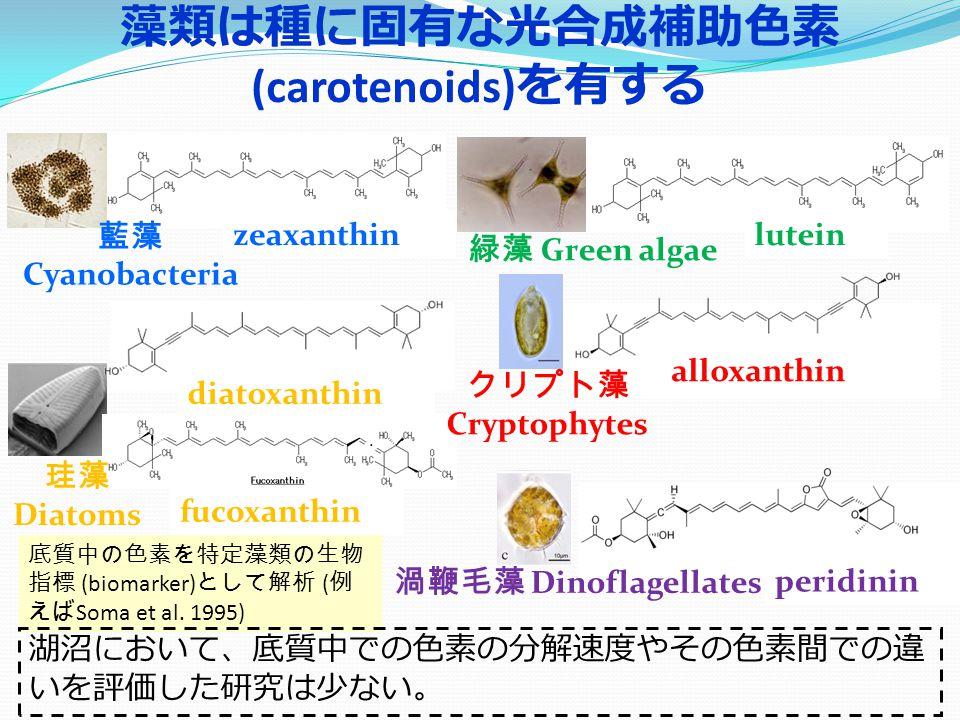 藻類は種に固有な光合成補助色素 (carotenoids) を有する 珪藻 Diatoms 渦鞭毛藻 Dinoflagellates クリプト藻 Cryptophytes 緑藻 Green algae alloxanthin diatoxanthin luteinzeaxanthin peridinin fucoxanthin 藍藻 Cyanobacteria 底質中の色素を特定藻類の生物 指標 (biomarker) として解析 ( 例 えば Soma et al.