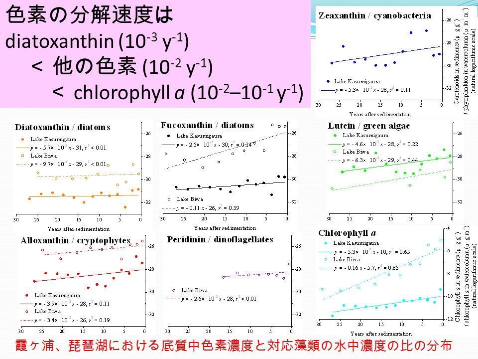 dX/dt = – kX と仮定 ⇒ X = X 0 exp (– kt) LN (X/A) = LN[X/ aX 0 ] = – kt – LN(a) X: 底質中色素濃度 (μg g -1 ) X 0 : 初期色素濃度 (μg g -1 ) A: 水中藻類濃度 (μm 3 m -3 ) a: 係数 (g μm 3 μg -1 m -3 ) k: 分解速度係数 (y -1 ) 霞ヶ浦、琵琶湖における底質中色素濃度と対応藻類の水中濃度の比の分布 色素の分解速度は diatoxanthin (10 -3 y -1 ) < 他の色素 (10 -2 y -1 ) < chlorophyll a (10 -2 –10 -1 y -1 )