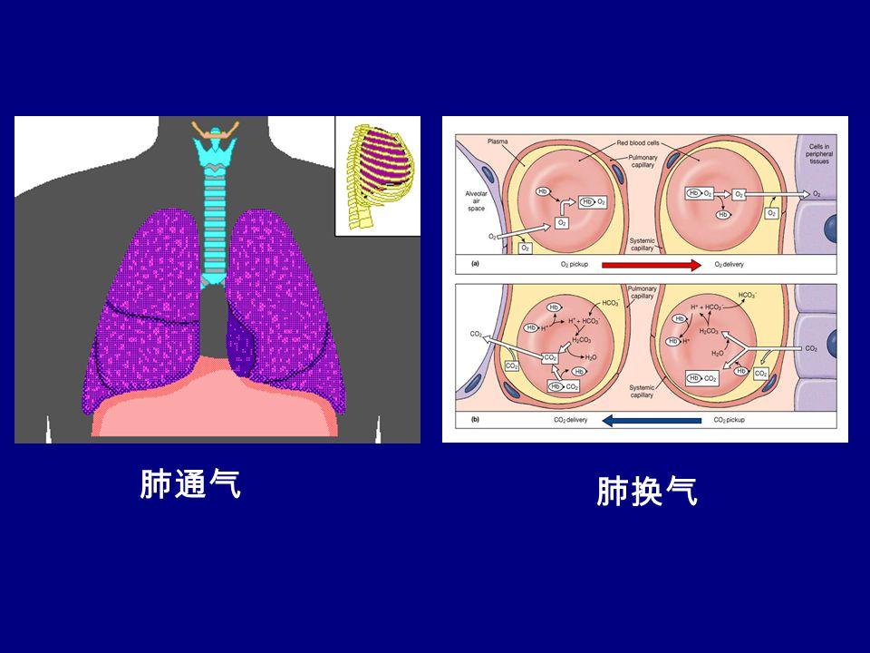 肺通气 肺换气