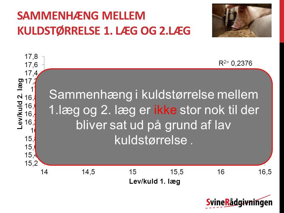 SAMMENHÆNG MELLEM KULDSTØRRELSE 1.