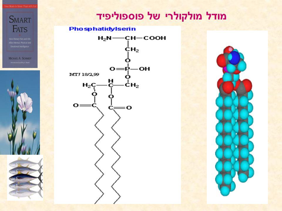 מודל מולקולרי של פוספוליפיד