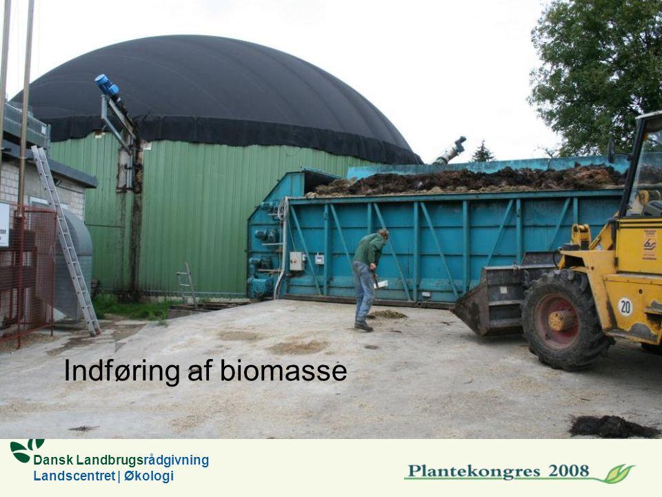 Dansk Landbrugsrådgivning Landscentret | Økologi Indføring af biomasse