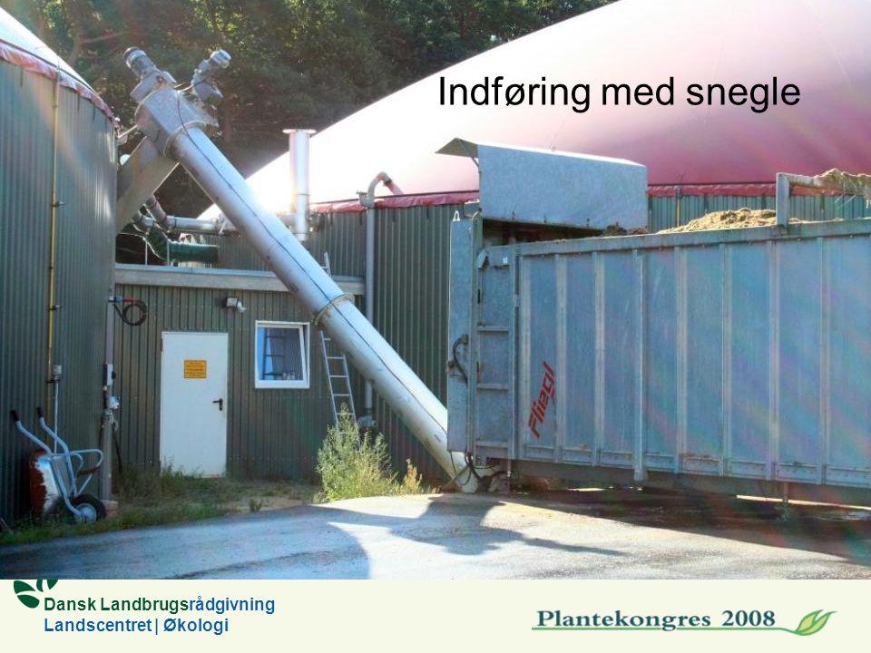 Dansk Landbrugsrådgivning Landscentret | Økologi Indføring med snegle