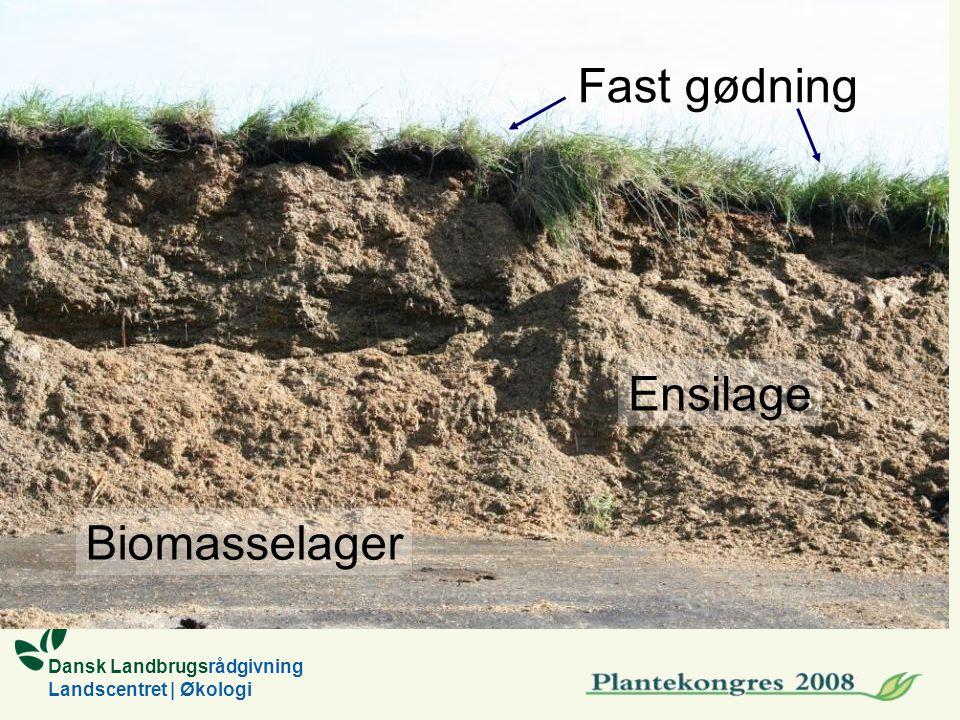 Dansk Landbrugsrådgivning Landscentret | Økologi Biomasselager Fast gødning Ensilage