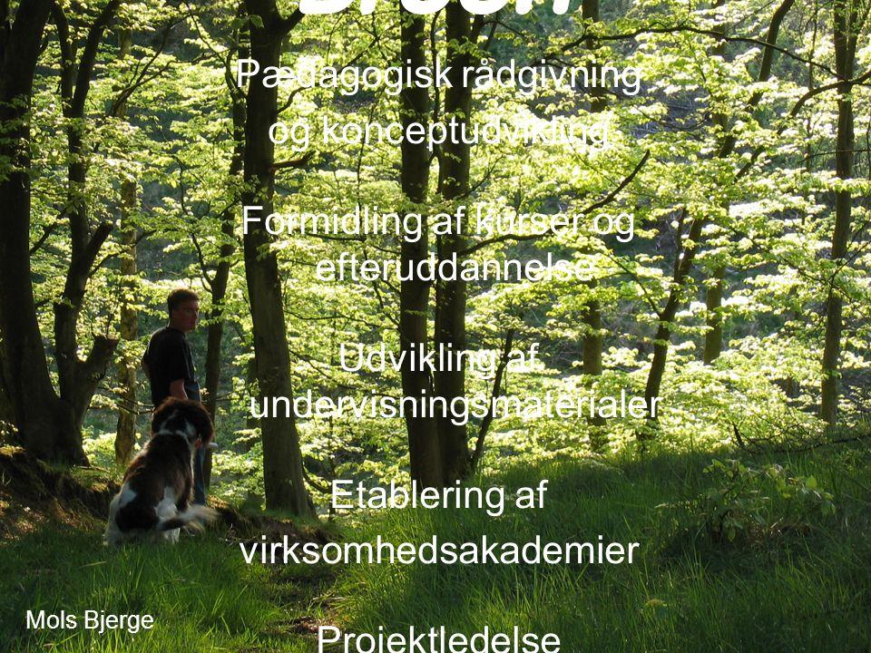 Mols Bjerge Pædagogisk rådgivning og konceptudvikling Formidling af kurser og efteruddannelse Udvikling af undervisningsmaterialer Etablering af virksomhedsakademier Projektledelse