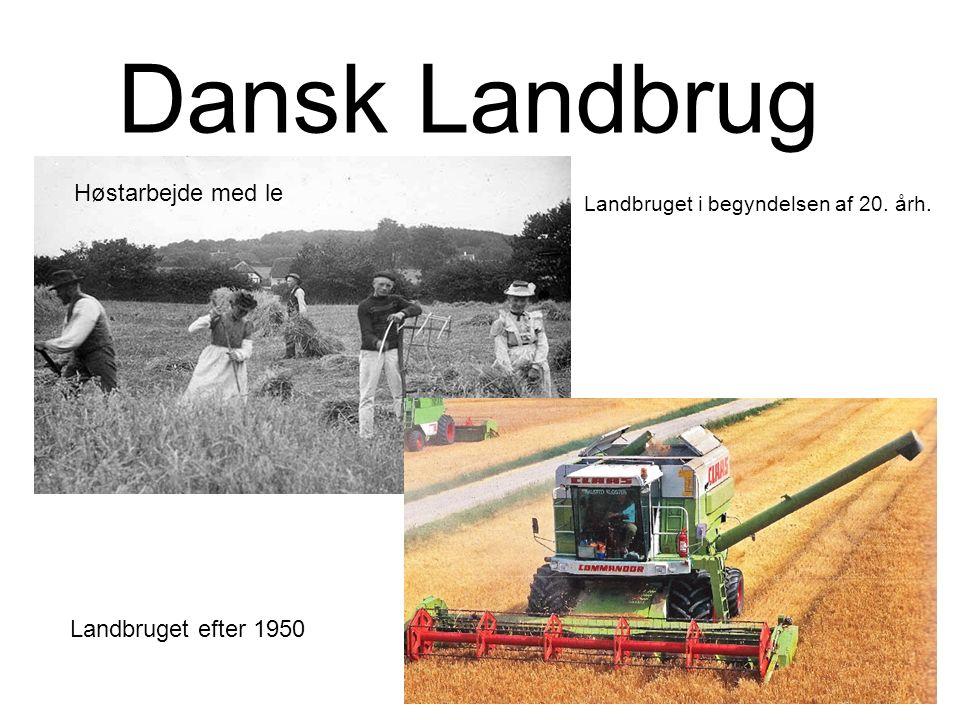 Dansk Landbrug Høstarbejde med le Landbruget i begyndelsen af 20. årh. Landbruget efter 1950