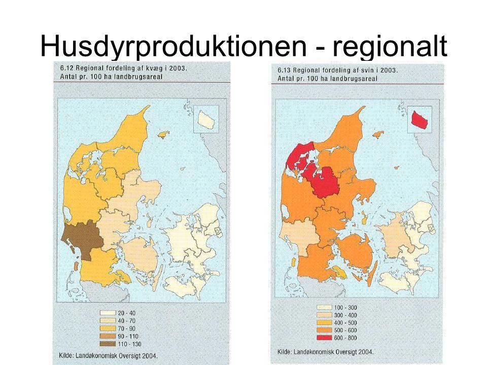 Husdyrproduktionen - regionalt
