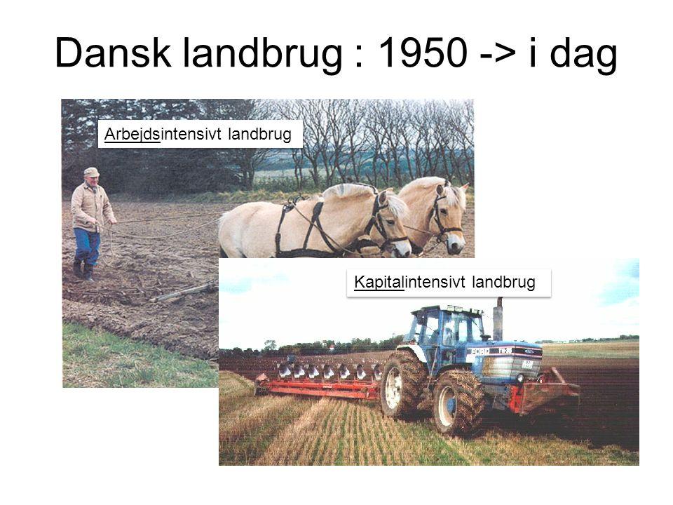 Dansk landbrug : 1950 -> i dag Arbejdsintensivt landbrug Kapitalintensivt landbrug